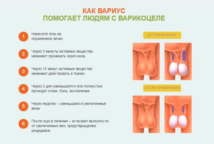 atlas-morfologicheskih-form-spermatozoidov-korzina